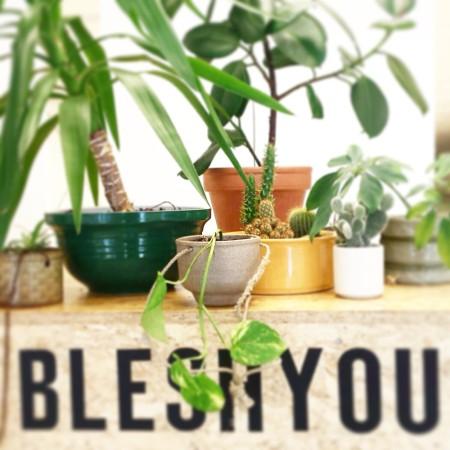 (februari 2015– heden) Bleshyou Weurtseweg 108, Nijmegen. Bleshyou combineert kennis & passie van planten tot een duurzaam concept.  Zo zijn er in de winkel tweedehands planten te vinden met elk hun eigen verhaal en opvallende planten van de meest fantastische kwekers en hun achtergrond.'